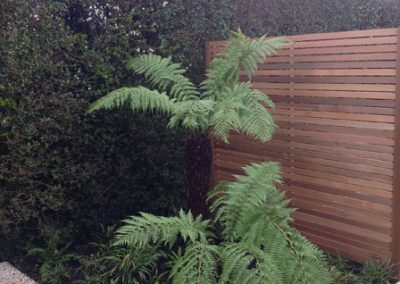 cedar screen fern
